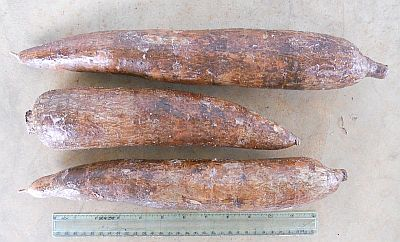 Fresh Cassava from Xagro