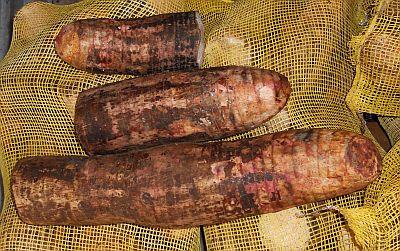 Xagro Fresh Taro Root From Nicaragua